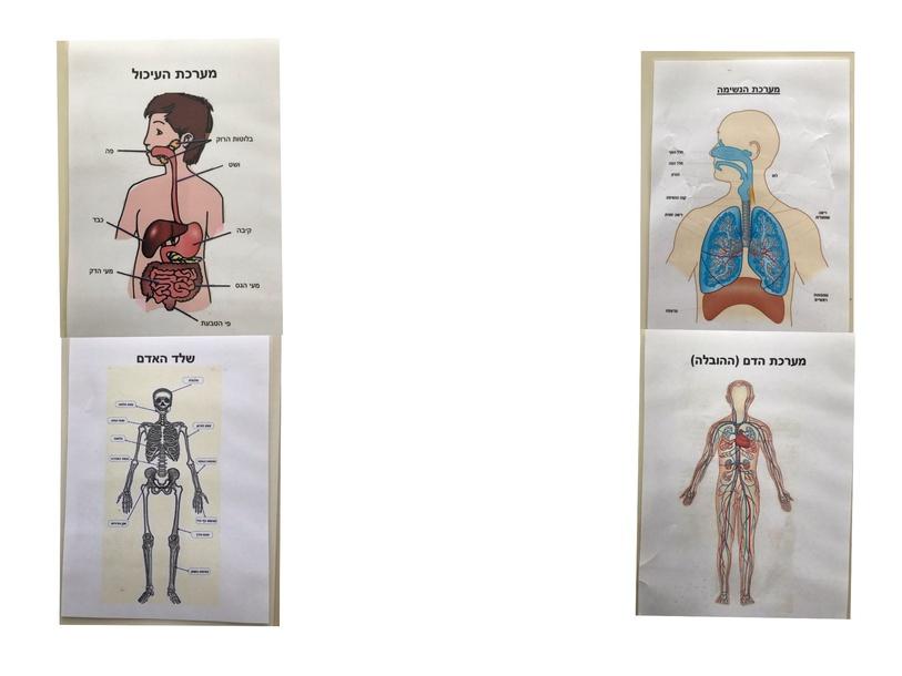 מערכות בגוף האדם by Miriam Nisim