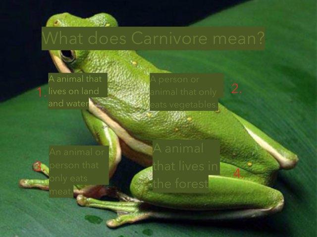 Frog Vocabulary  by Coach Hallis