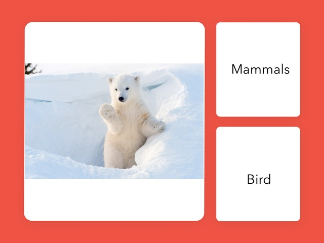 BA 24 Polar Bear Quiz Valentina And Davih  by Bilingual Adventure