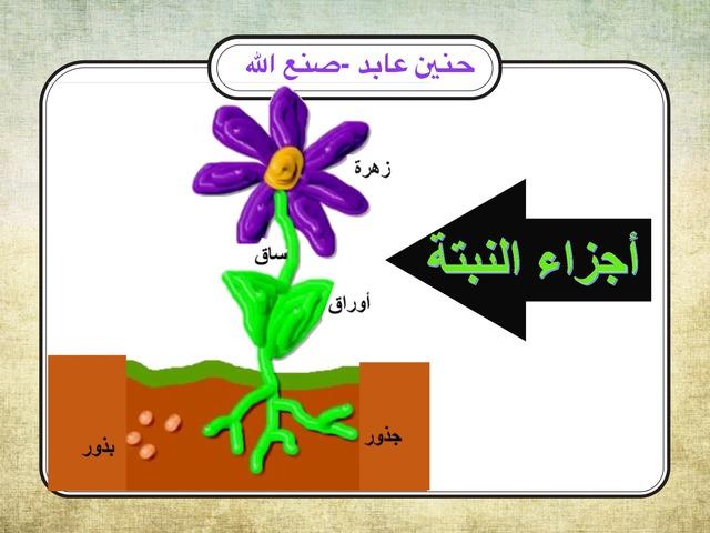 أجزاء النبتة by Hanen Sanallah