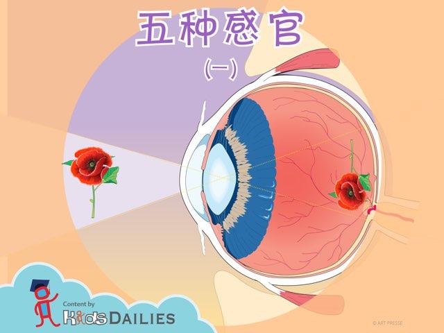 五官感觉(1) by Kids Dailies