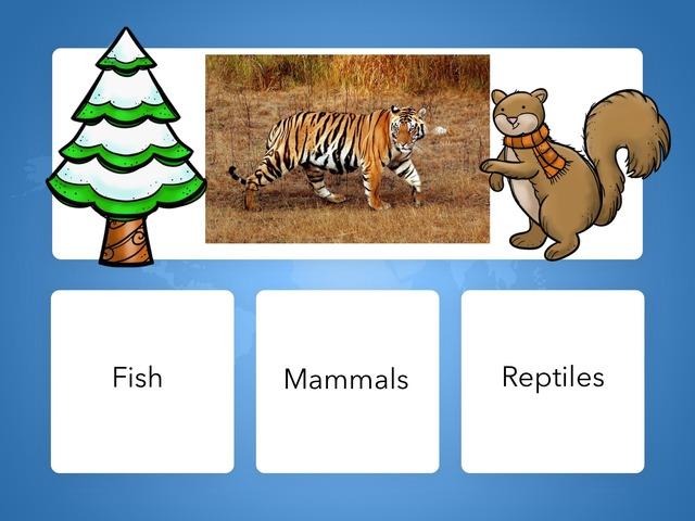 BA 201 Tiger Quiz Luisa And Hector by Bilingual Adventure