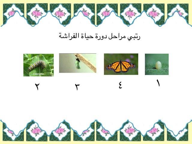 ترتيب مراحل دورة حياة الفراشة  by أماني الغامدي