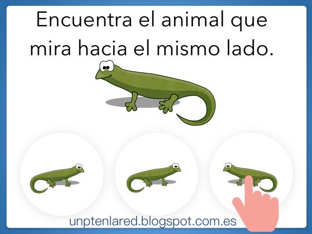 Encuentra El Animal Que Mira Hacia El Mismo Lado. by Jose Sanchez Ureña