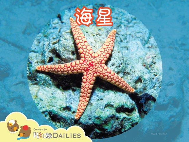 一起来学习关于海星的知识吧! by Kids Dailies