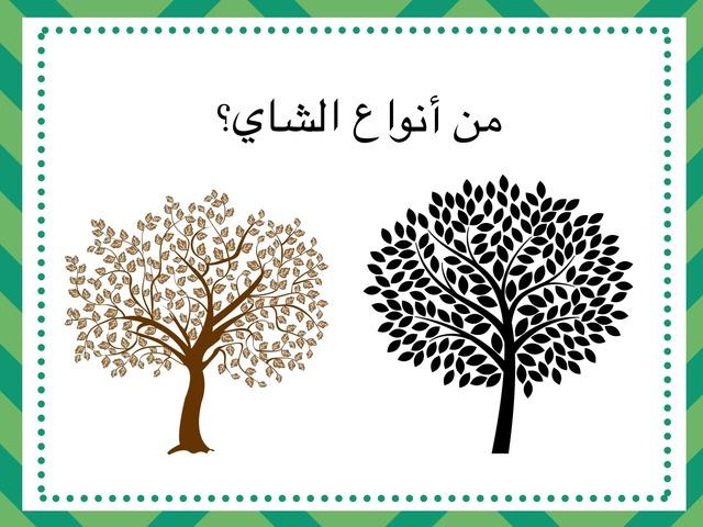 اسرية درس الشاي by Maha Ha