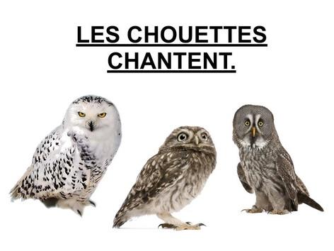 Les Chouettes Chantent. by Valerie Escalpade