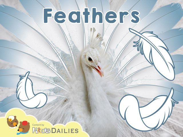 Feathers by Kids Dailies
