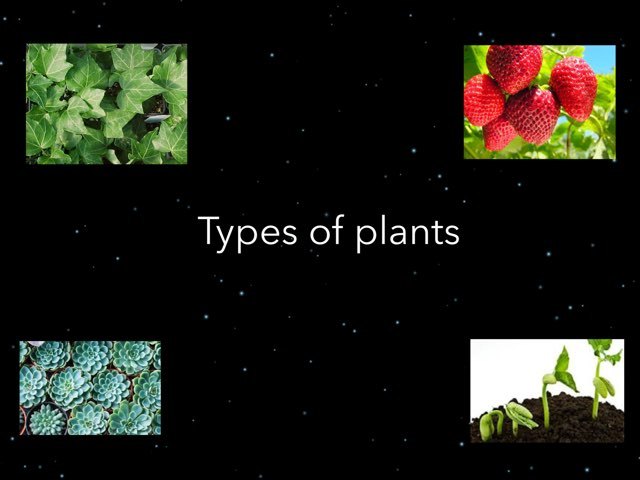 Types Of Plants by Frances Chapin