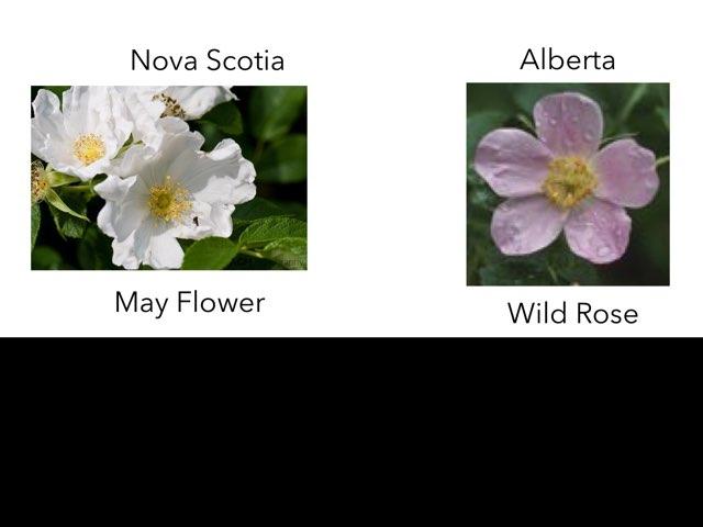 Nova Scotia by 3NM iPad