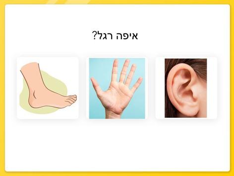 מבדק פשוט גוף האדם by Yuval Mazan