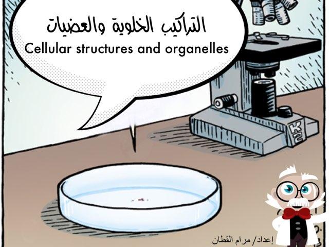 التراكيب الخلوية by Maram Hassan