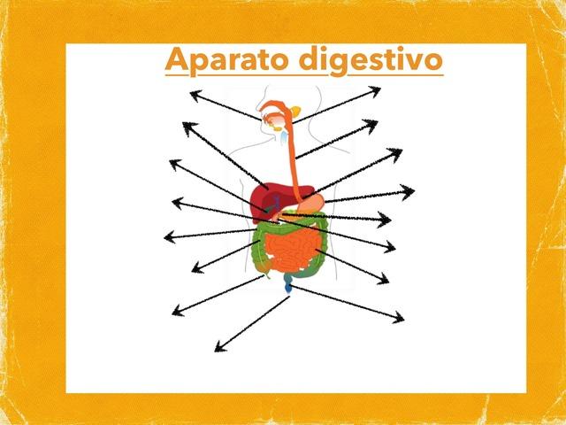 Aparato digestivo by Angela