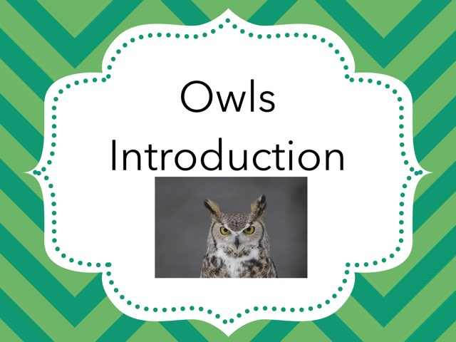 Owl Introduction by Sarah Bosch