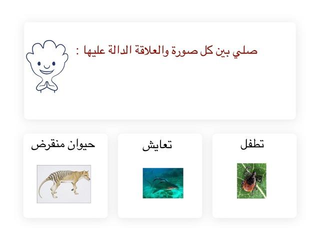 لعبة العلوم  by محمد الشهراني