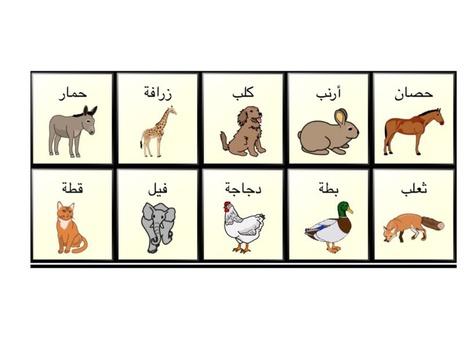 حيوانات by khadeje okab