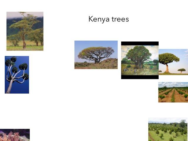 Kenya - Juliet by FarBrook School