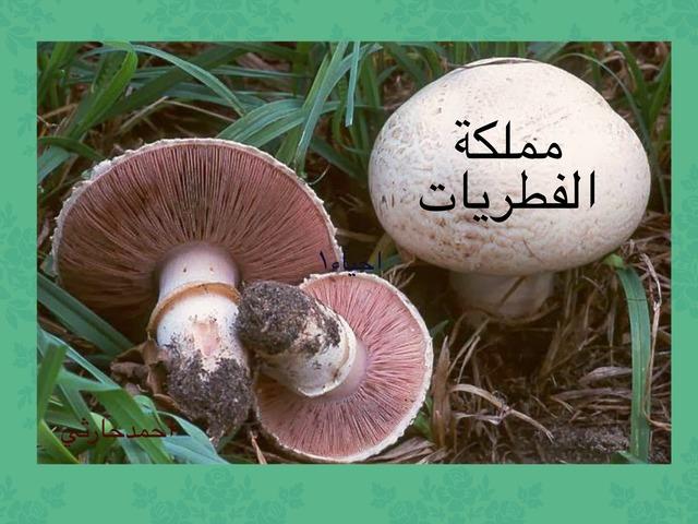 الفطريات by احمد كريري
