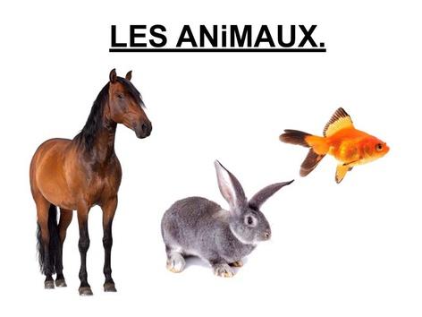 Les Animaux Désignation 1. by Valerie Escalpade