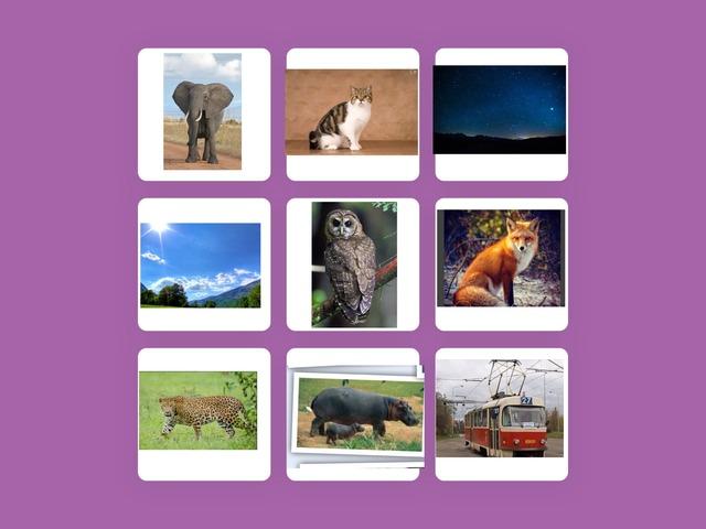 Unit:-4 Night safari(1) Grade (6) by Norah Ghazali
