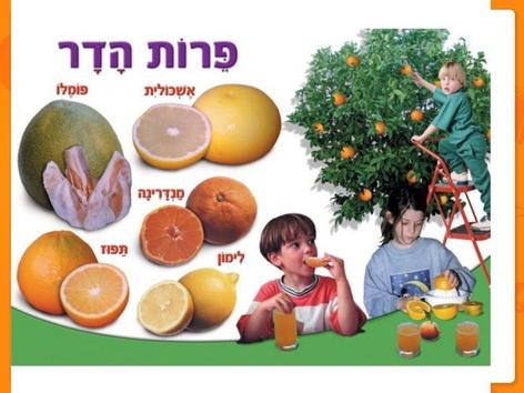 פירות הדר אוריינות by נעה גתי