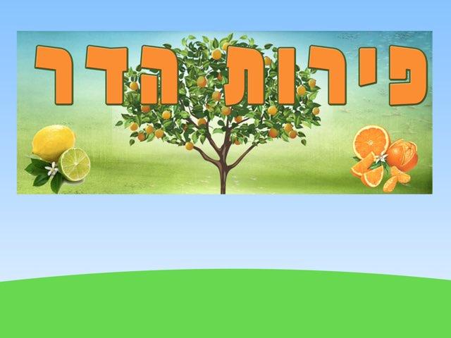 יולי-פירות הדר by יולי שמרצקי