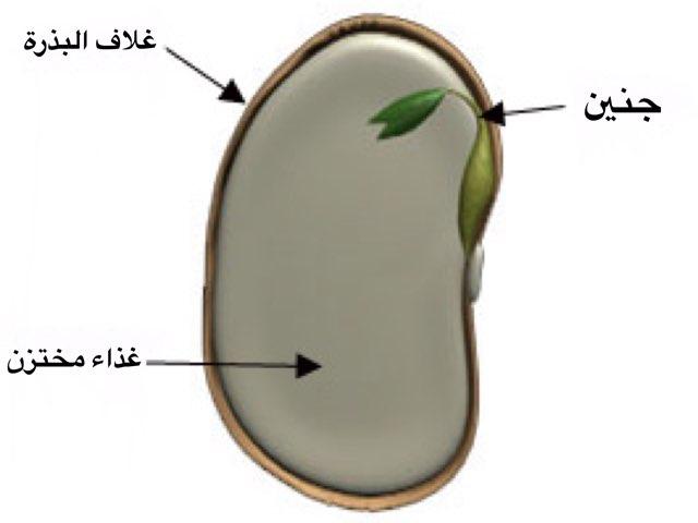 كيف تنتج الازهار ثمارا وبذورا  by Mariam Alarfaj