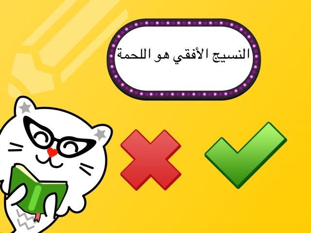 لعبة 67 by Rana Alkhattabi