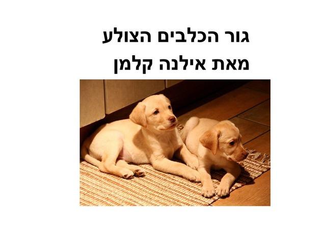 גור הכלבים הצולע הבנת הנקרא by מכללה תלפיות