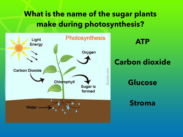 Part 2 General biology photosynthesis by Vivian Janik