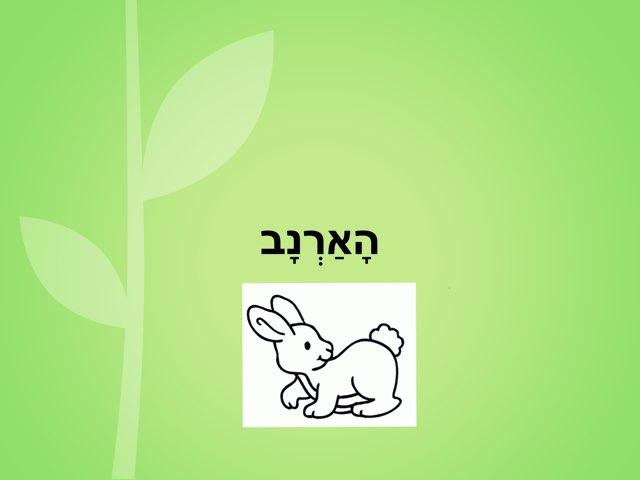 הארנב by רות אליצור