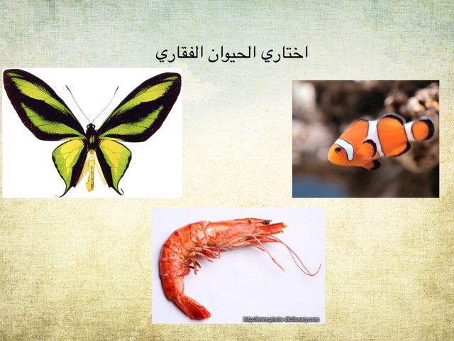 الحيوان الفقاري سؤال  by hanan alhashemi