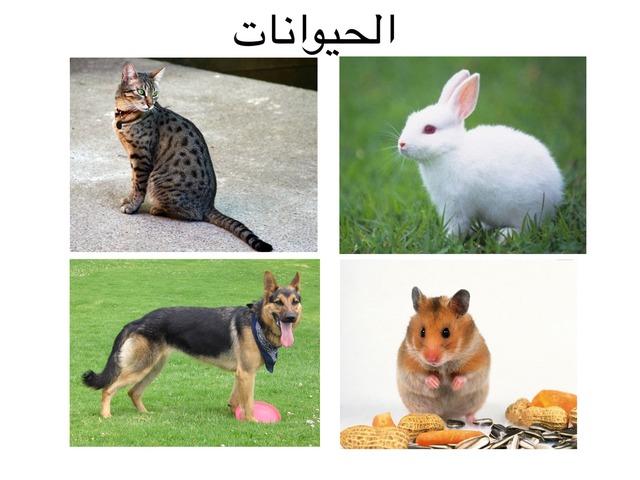 الحيوانات الأليفة (مدرسة الجنان للتربيه الخاصة كفر قاسم) by חדיגה עאמר