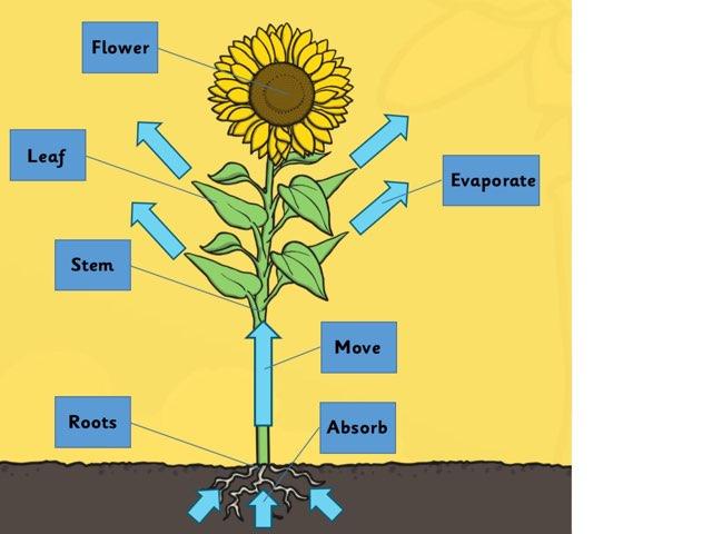 Plant parts by Glenn Bridges