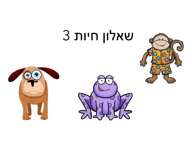 שאלון חיות by Meital Avissar