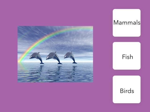 BA 25 Dolphin Quiz Joana Malu by Bilingual Adventure