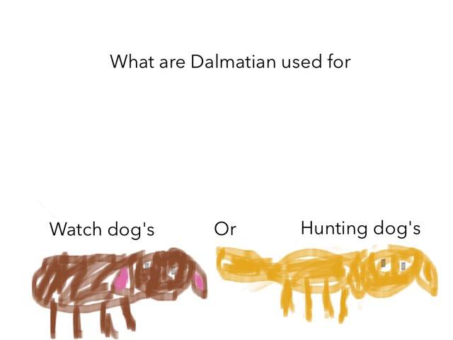 Liliana's Quiz by Colleen Kanemoto