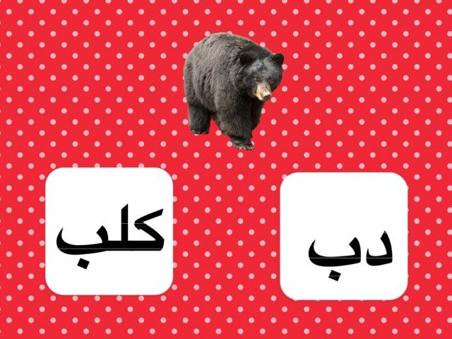 كلمة دب by Noura Abdulaziz Al-amr