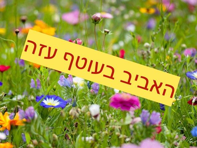 משחק האביב by חגית אפרים