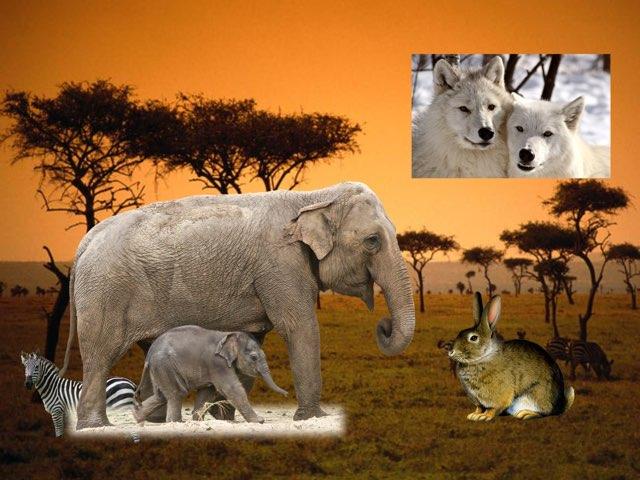 בעלי חיים שלומי by מיכל יאיר