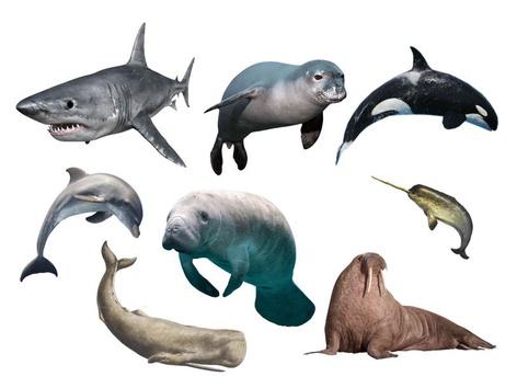 Large Marine Life Identification  by Sarah Dominek