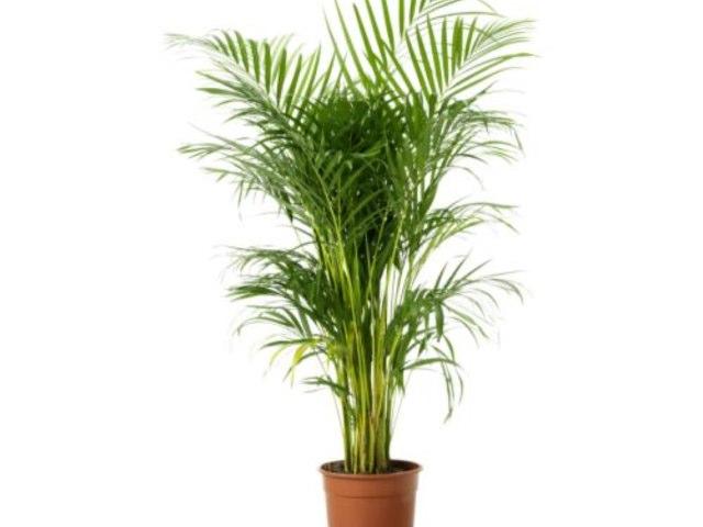 Plant Parts by Sandra Wilson