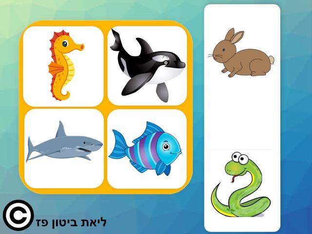 בעלי החיים בים עברית העתק by Liat Bitton-paz