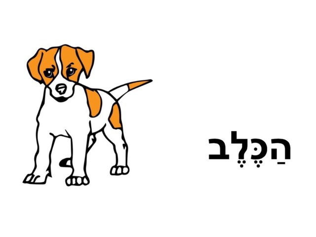 הכלב הבנת הנקרא by שחר בית ספר