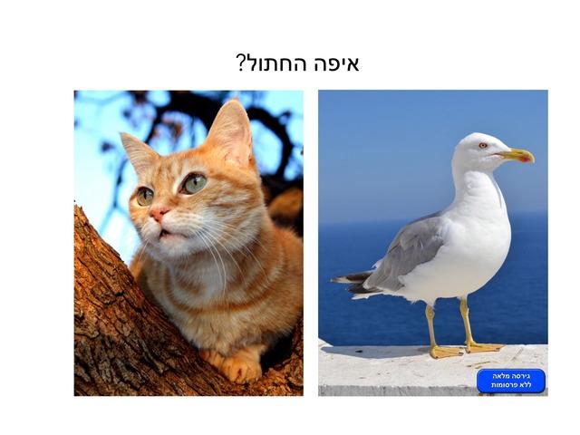 איפה החתול? by dana dagan