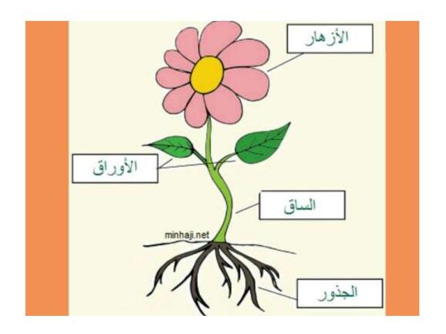 صنف اجزاء النبتة by Um Zahari Hassan