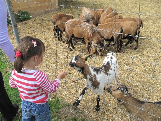 قيم وسلوك كيف تتكاثر الحيوانات by Mariam Alarfaj