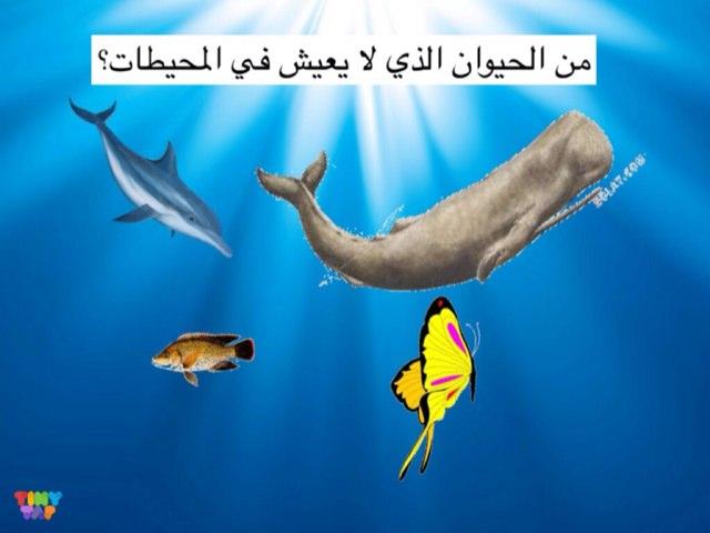 لعبة 74 by Reem Adel