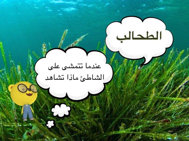 الطحالب by brooy 93
