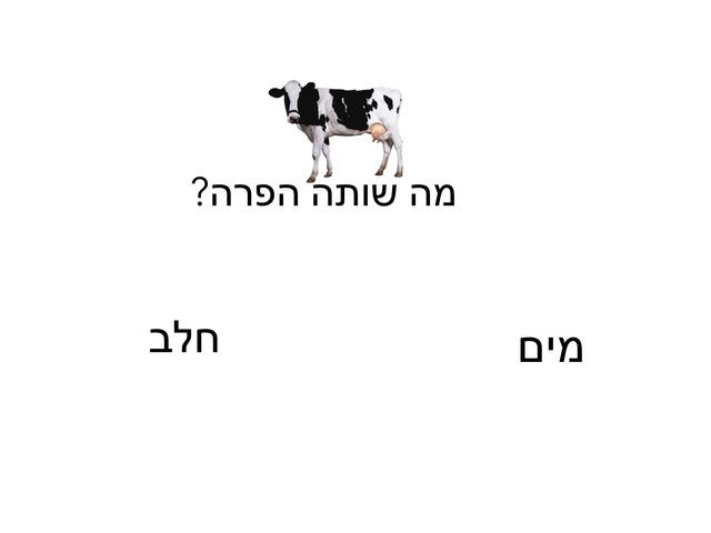 טריויה חיות 2 by Meital Avissar